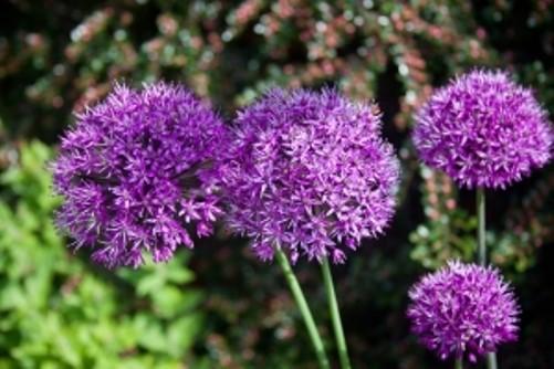 Tips para plantar flores - Winterharte pflanzen fur garten ...