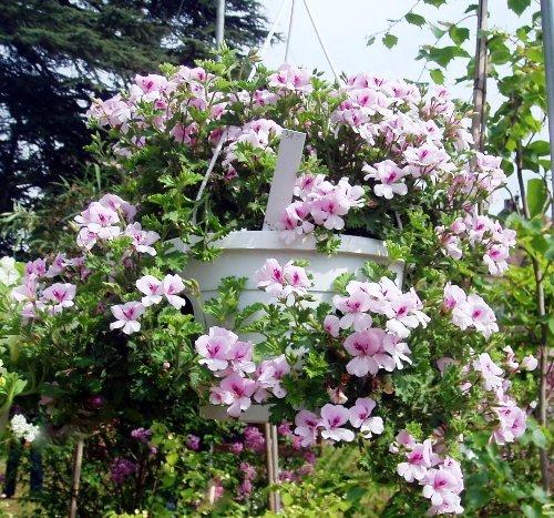 Tips para cuidar tus plantas colgantes - Plantas colgantes ...