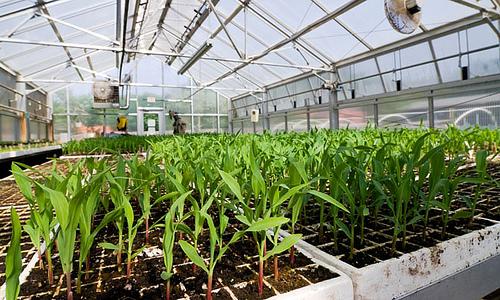 Las plantas recomendadas para un invernadero Plantas de invernadero