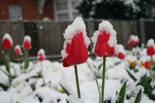cuidar tu jardin en el invierno