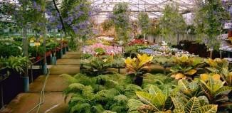 Jardinería de interior