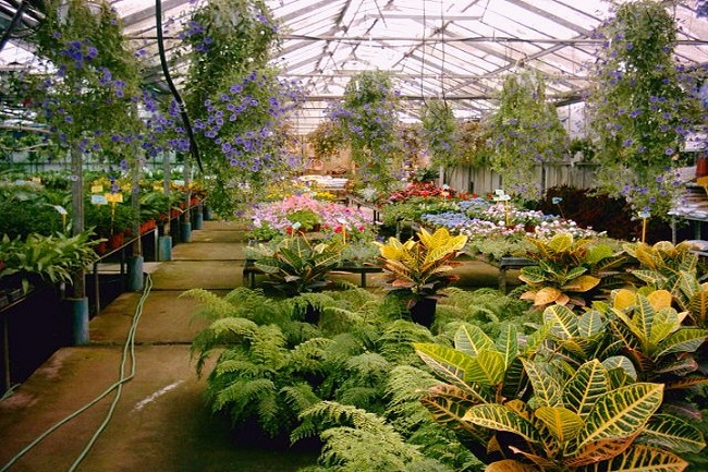 Jardiner a archives - Jardineria para principiantes ...